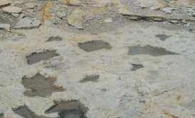 Two sets of dinosaur tracks